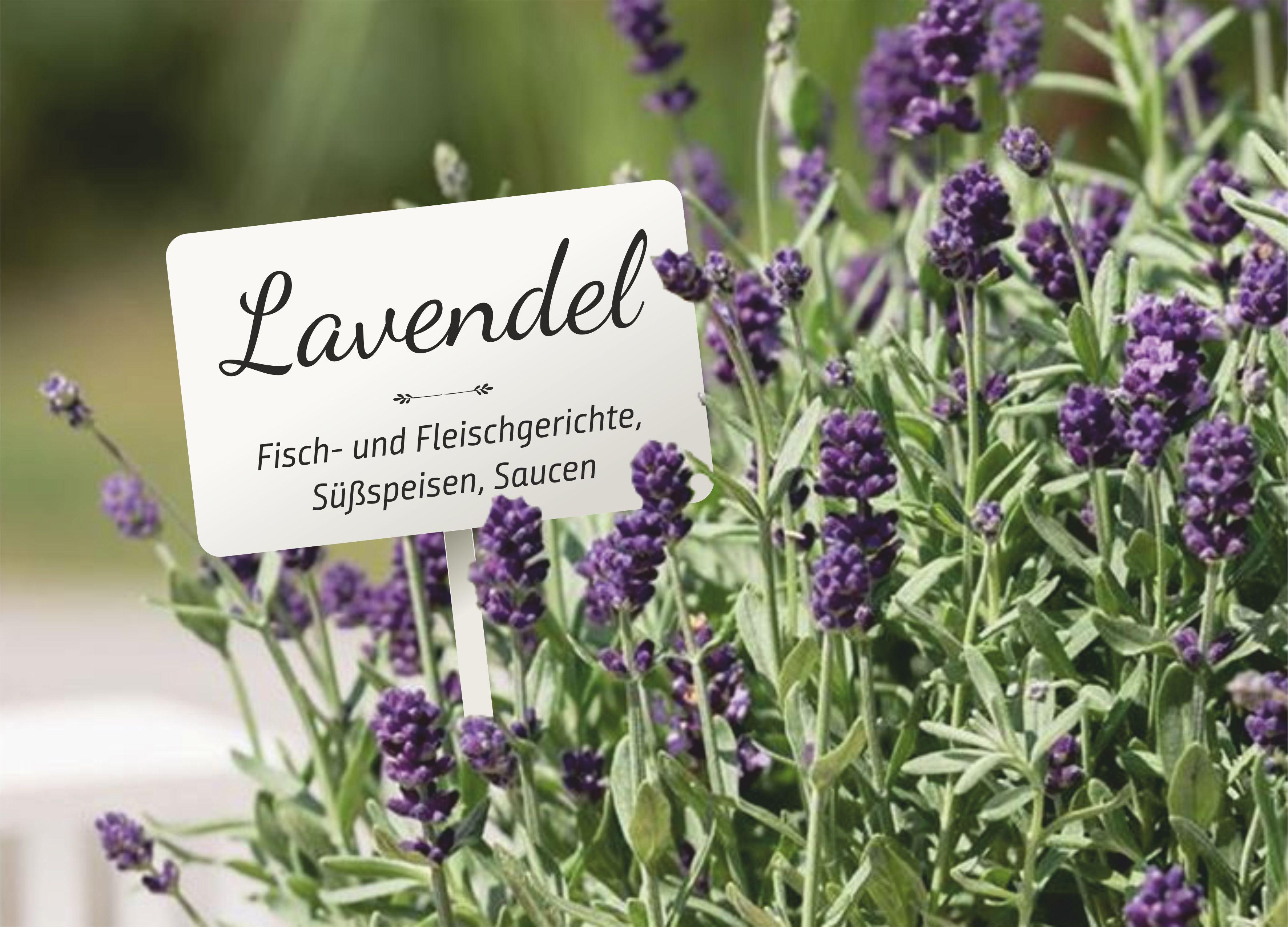 Kräuterschild XXL - Küche & Garten gut organisiert